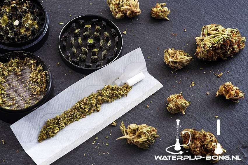 De pure joint vs de traditionele Hollandse joint met tabak